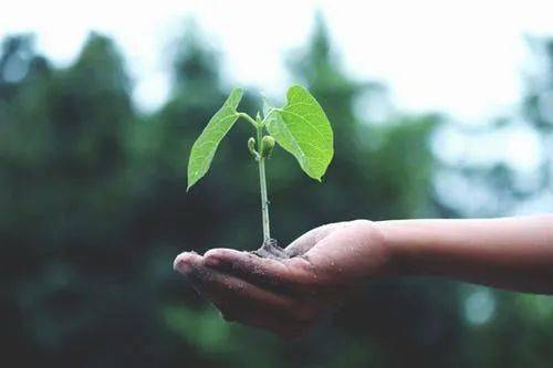 【世界形势日】你知道这些环保知识吗?