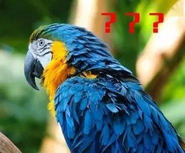 """今年2号台风""""鹦鹉""""将至?未来几天海南天气消息提前知图片"""