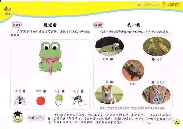 青蛙的舌头 教学指南