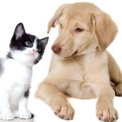 欧洲宠物需求激增,无良商人偷运狗,残忍招数令人愤怒图片