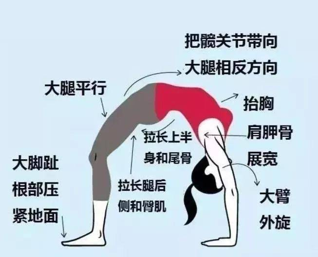 瑜伽轮式不只是后弯,这么做轻松达成,没你想得那么难