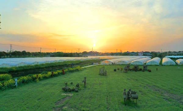 起源天山脚下的西瓜品种,带来上海乡村振兴另类样本