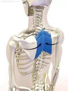 练瑜伽,一定要学会激活启动肩胛骨!_运动 高级健身 第11张