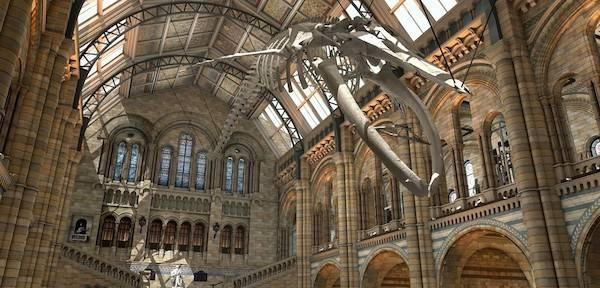 「道格·古尔」有危机也有挑战,道格·古尔将出任英国自然历史博物馆新馆长