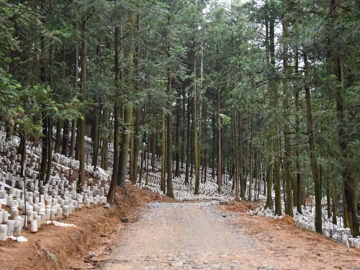 贵州黔西南:山林助脱贫