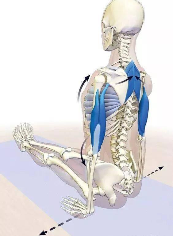 练瑜伽,一定要学会激活启动肩胛骨!_运动 高级健身 第8张