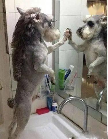 狗狗也能证实:不进一家门,不是一家人