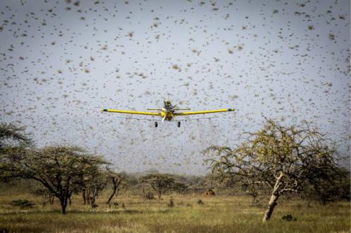 """粮食不安全问题冲击非洲,疫情之外尚需""""预防混乱的疫苗"""""""