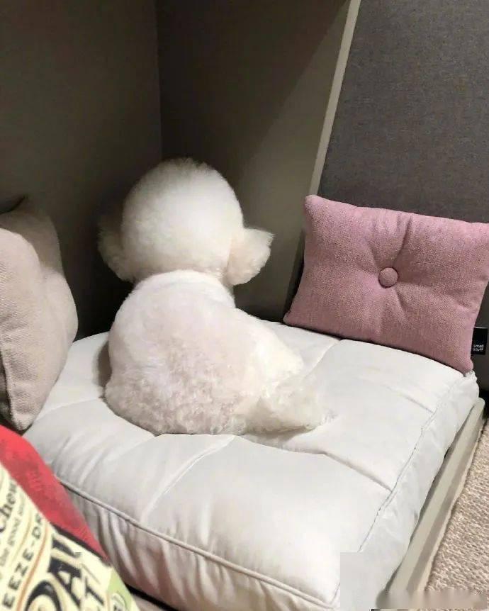 别人家的狗子都是天使啊!可爱的有点太过!