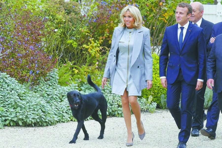 法国第一犬,礼物比马克龙还多_法国新闻_法国中文网