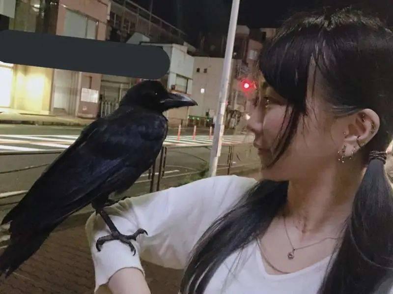 日本妹子在路边捡到一只乌鸦,没想到它竟赖在家中,不准备走了……