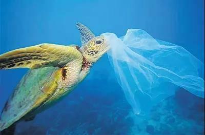 中科院成功研发海水可降解塑料,希望率先在海南应用推广