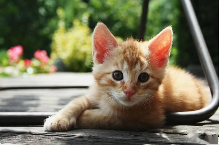 研究称一千多年前人类就把猫咪当作宠物来照顾
