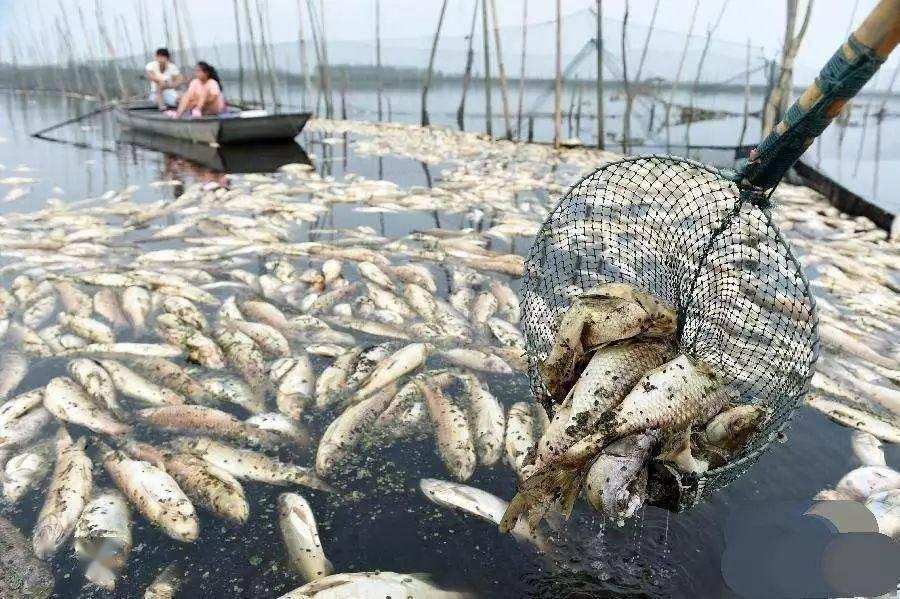 高温缺氧致鱼虾蟹大量死亡,养殖户如何避免惨剧的发生