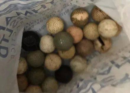 网友回家看到狗子昏厥,送去检查后,发现它竟偷吞下26颗球!