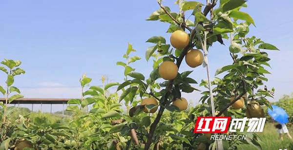 蒸湘区:助力优质农产品和乡村旅游经济成长