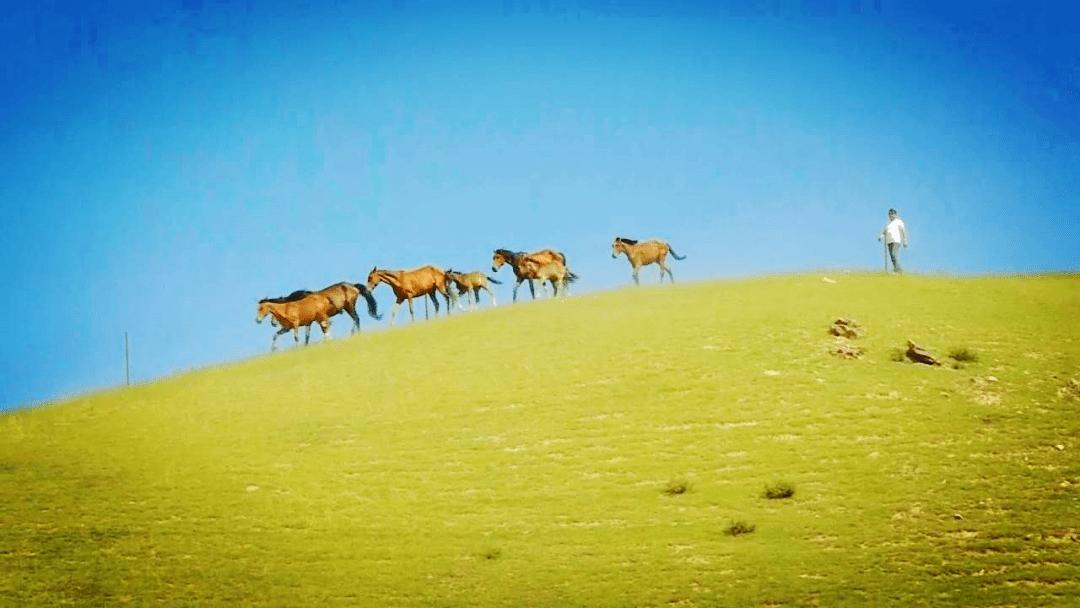 k5电竞官网:伊犁州直牧业经济增长势头良好。 伊犁州直畜牧业现状...