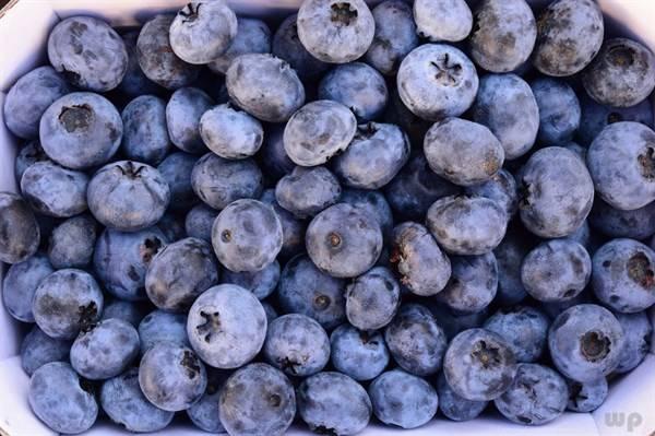 蓝莓水果是我们生活中常见的水果 眼底视
