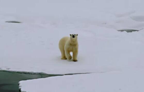 """""""熊出没!""""""""雪龙2""""号偶遇北极"""