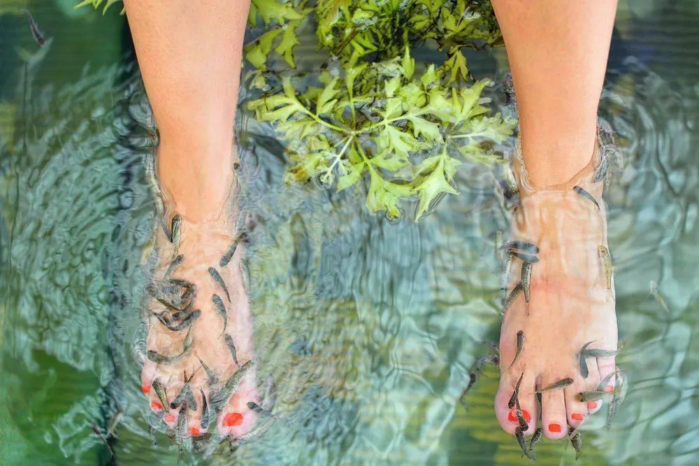 温泉鱼疗,舒服还能治脚气?