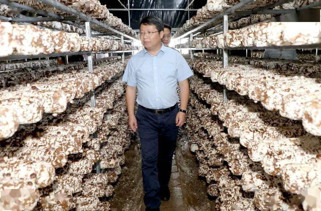 李刚考察了贵州红林农业科技有限公司林