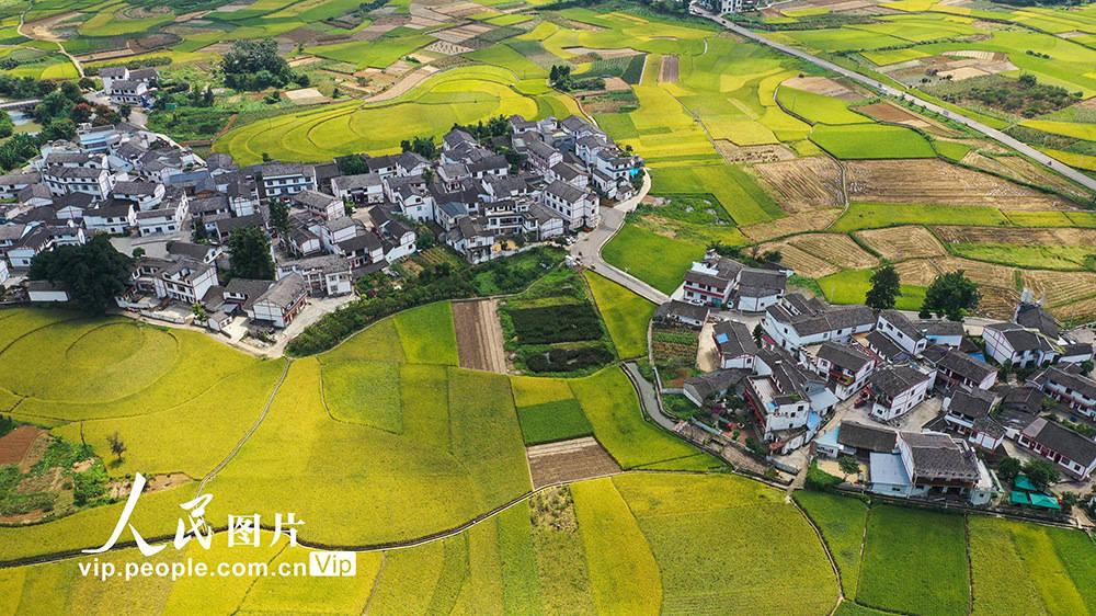 贵州兴义:丰收田园 美景如画