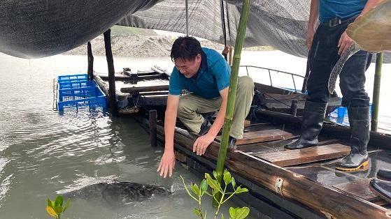 中国首个海龟野化基地在广东启用