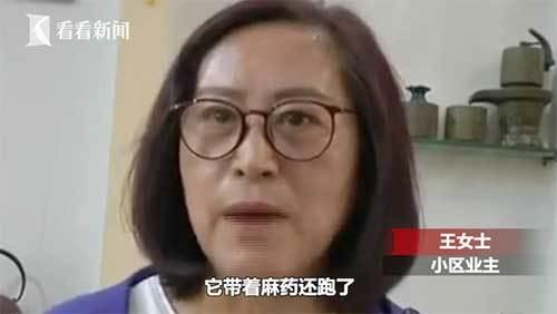 """痴守三年!""""忠犬八公""""病了 业主合力抓捕送医"""