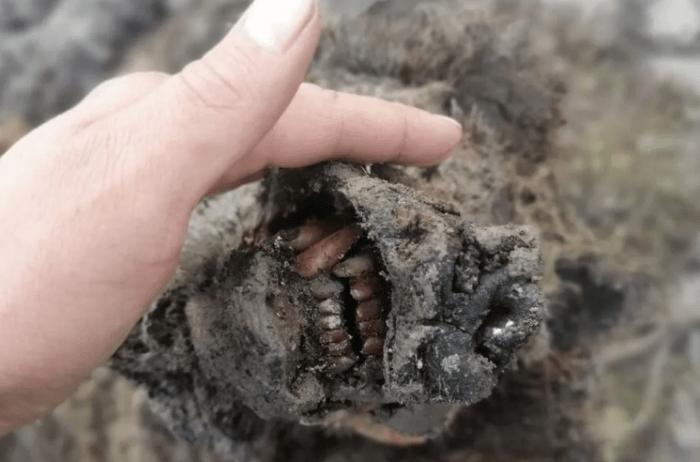 科学家发现冰河时代洞熊遗骸