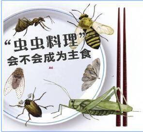 """养殖昆虫""""爬""""上餐桌 你敢吃吗?"""
