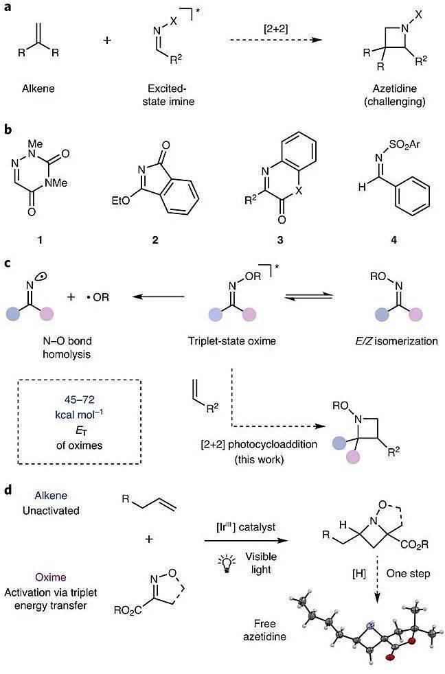 Nat. Chem.:可见光驱动[2+2]环加成反映合成氮杂环丁烷