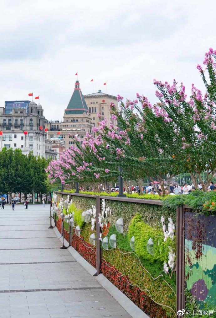 紫薇二次开花!一起去外滩、南京路赏花吧~