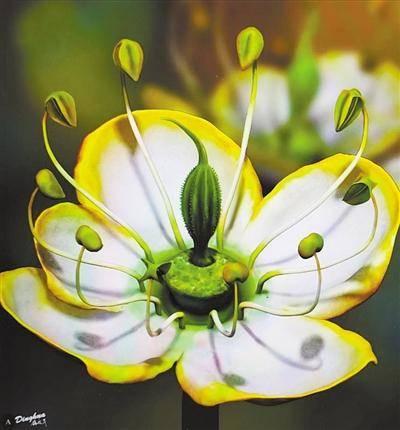 一朵1500万年前的花 能让我们接近花朵演化的真相吗