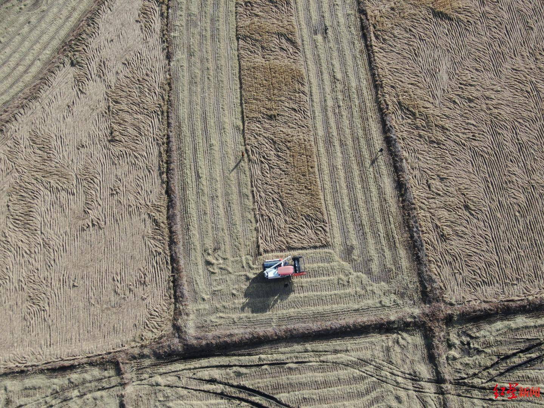 """内蒙古2.5万亩""""成都农场""""丰收啦!5年内,成都异地农场将达25~30万亩"""