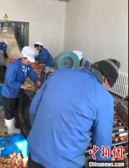 通讯:京蒙科技合作助兴安盟沙果产业发展