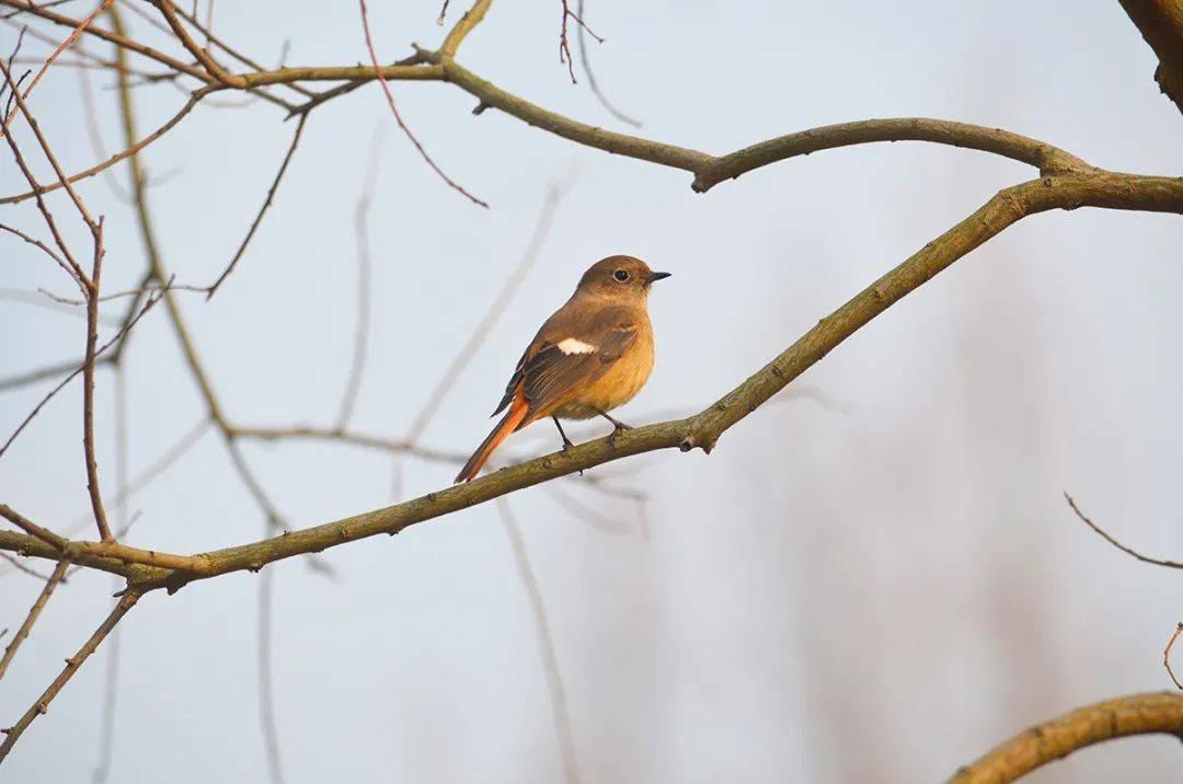辰山植物园过冬候鸟已就位 自然生态交响曲即将开场