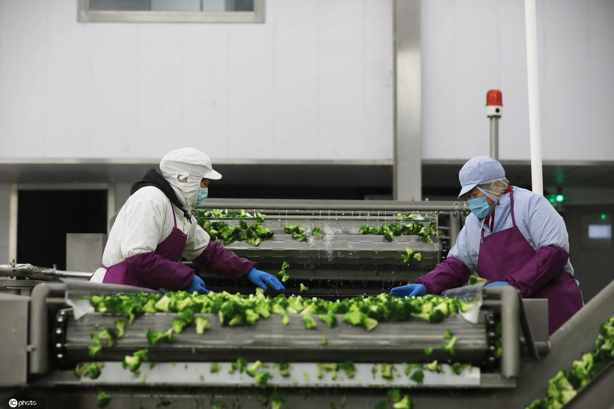 江苏滨海蔬菜走出国门远销欧美年产值3亿元以上
