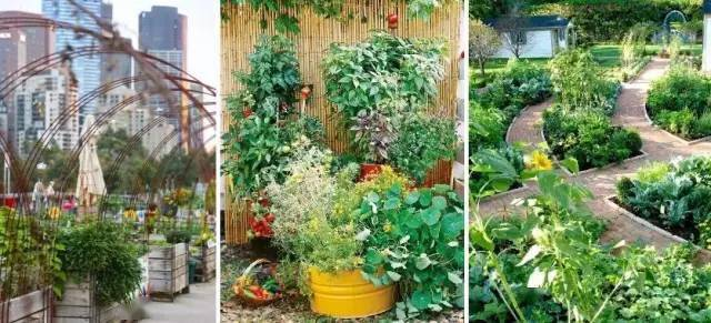 花园就是菜园,菜园就是花园!