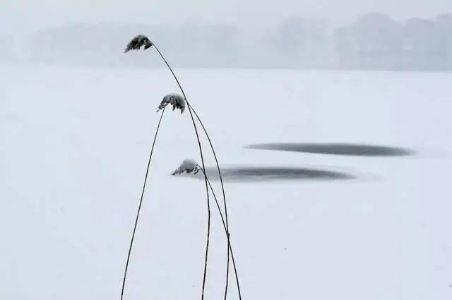 【幽湖之声】泇河的雾(外一首) 文/朱三 朗诵:幽湖