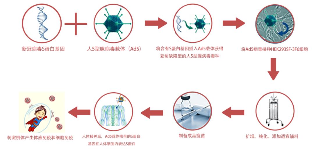 一文读懂腺病毒载体新冠疫苗(Ad5