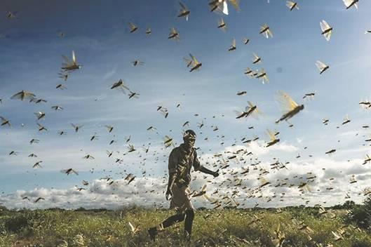 《自然》杂志精选的年度科学图片