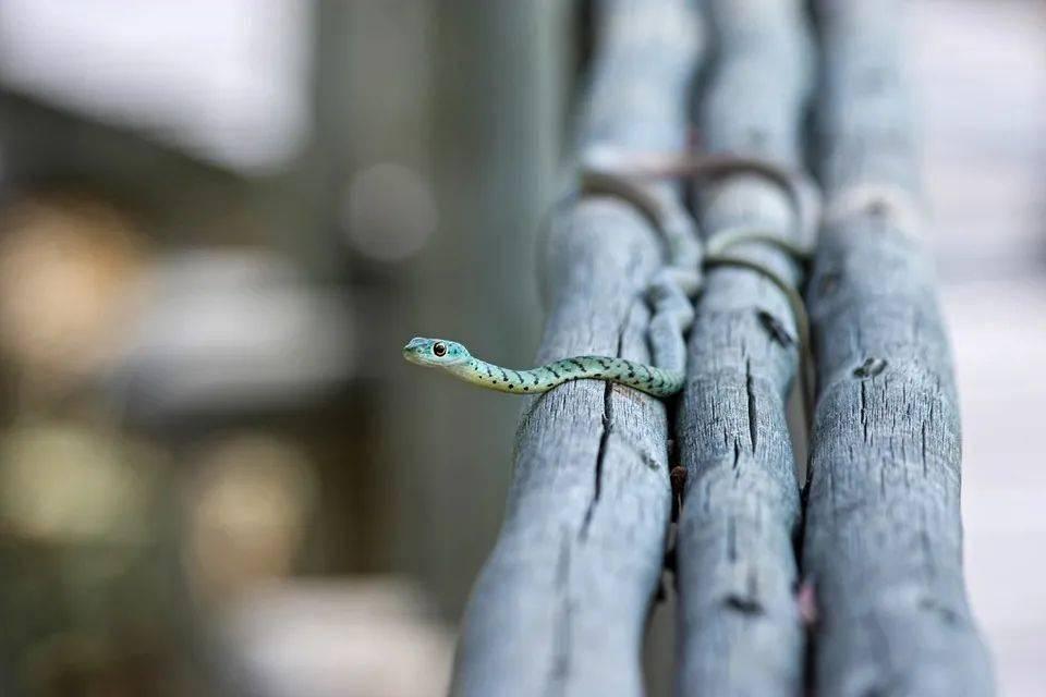 小飞蛇如何在滑翔时不翻车?  第2张