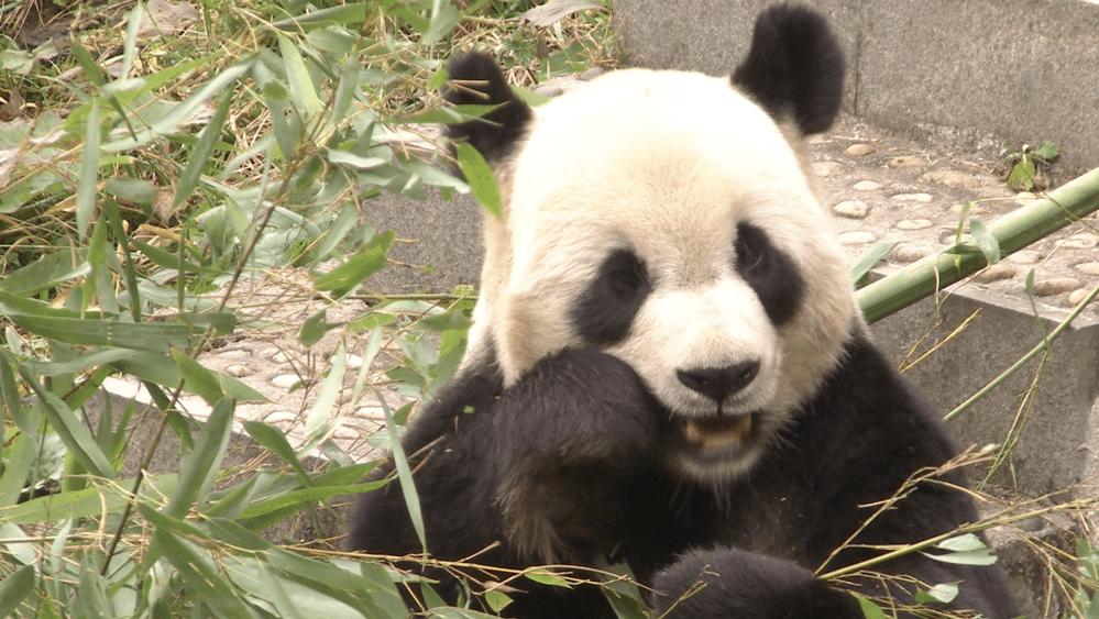 """色彩纷呈的""""宝地""""!来熊猫老家四川宝兴,给你点""""颜色""""看看!"""
