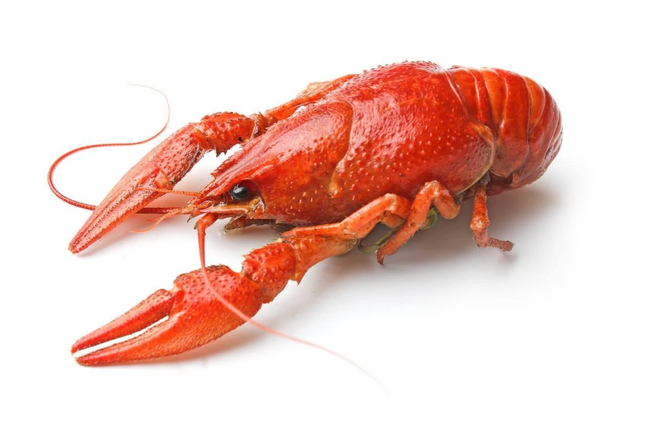 我国小龙虾近年来的养殖规模和总产值是多少?