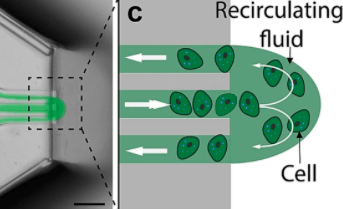 瑞典科学家利用3D打印神经细胞复杂图案