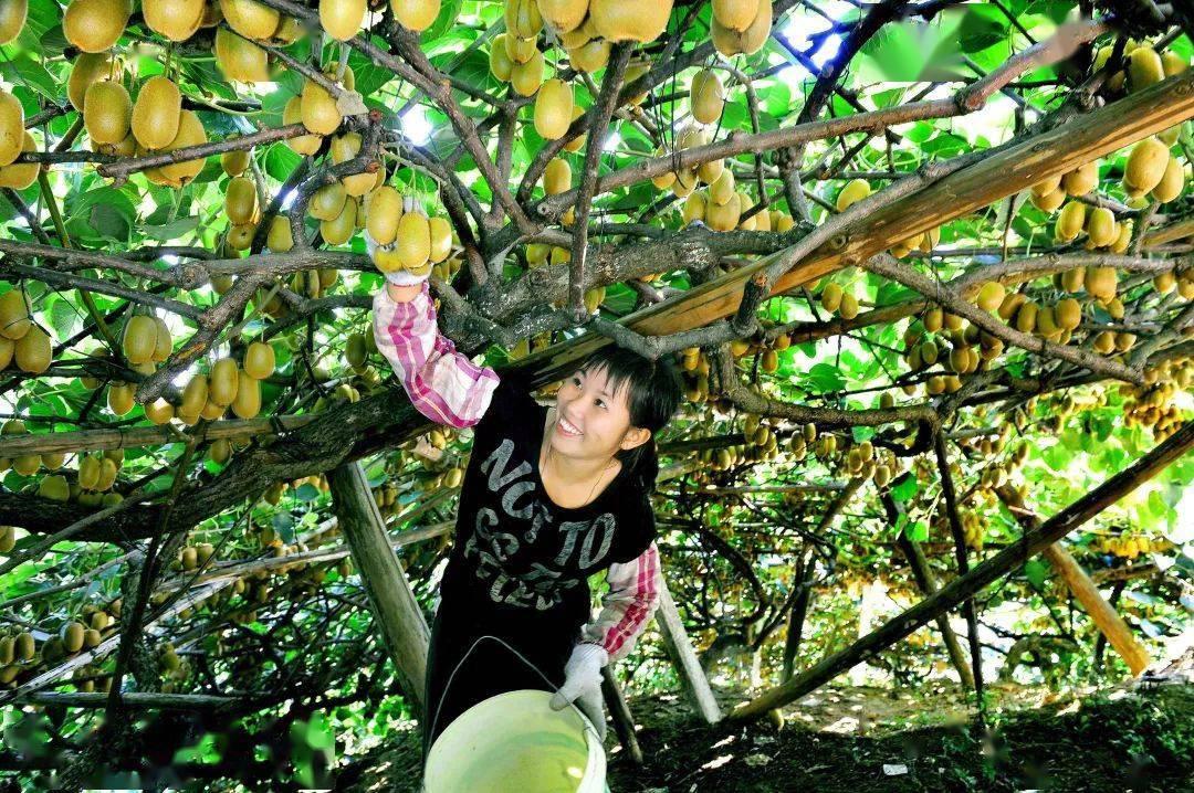 这份国家级产品名录,河源5个优质农产品上榜!