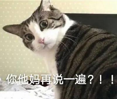 我以为我的猫丢了,原来…是我瞎了