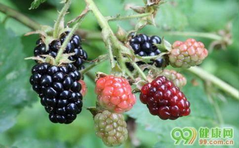黑莓的功效与作用禁忌(黑莓水果的功效与作用)
