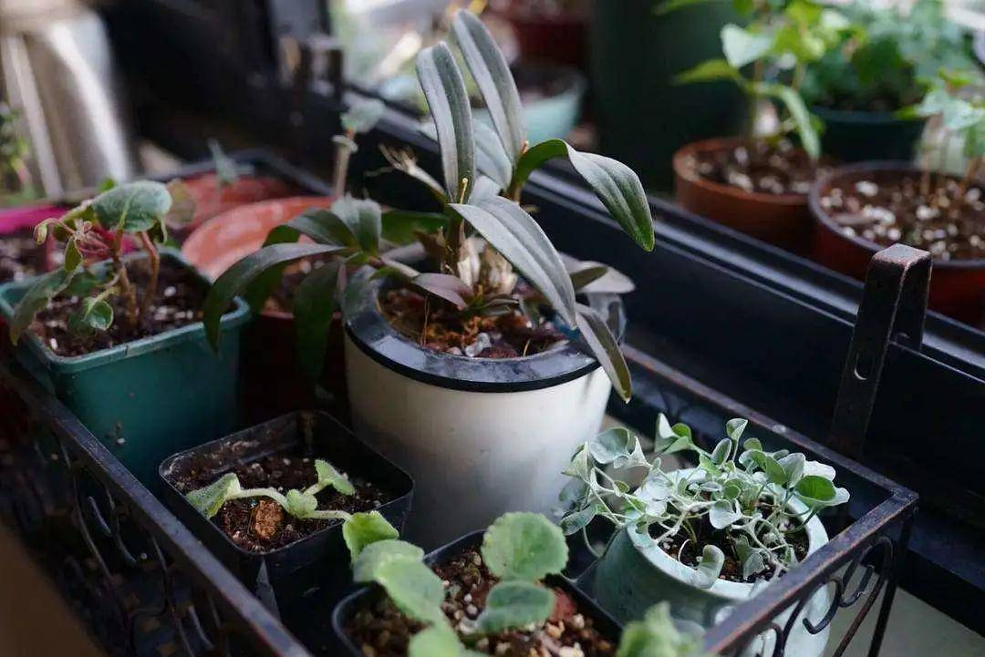阳台养花后杂乱拥挤?这样做,5平米能种上几十盆花!