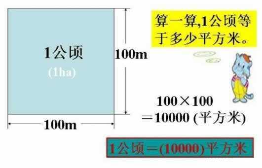 一公顷等于多少平方米及一亩等于多少平方米?面积单位换算公 网络快讯 第1张